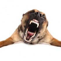 Mon chien est trop agressif