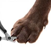 comment couper les ongles d'un chien