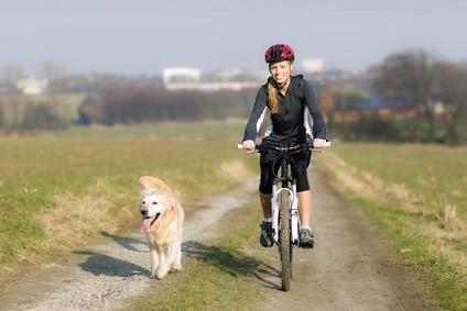 Comment faire du vélo avec son chien