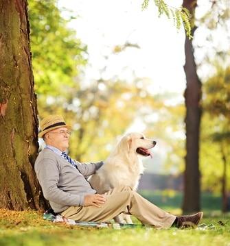 3 conseils pour réussir le dressage de son chien