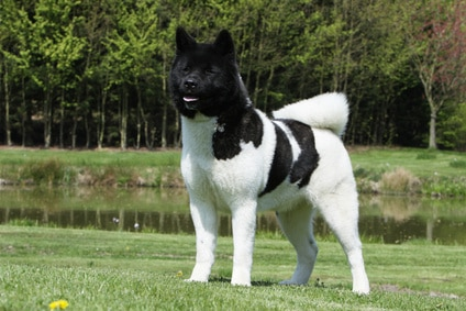 toute race de chiens avec photos