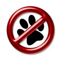 5 fausses idées reçues sur le chien