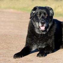 comment calculer l'âge de son chien