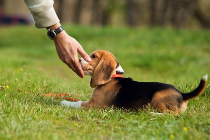 l'éducation du chien améliore la relation