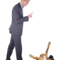 peut on faire de l'éducation sans dominer son chien