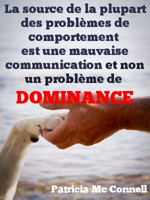 citation chien6