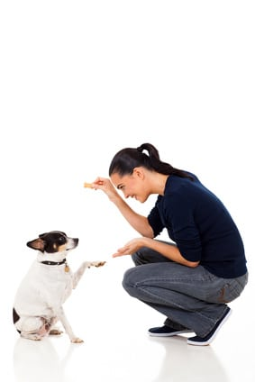 Comment éduquer son chien sans nourriture