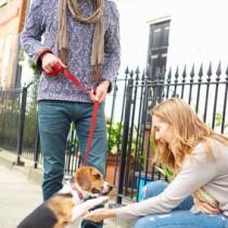 apprendre les bonnes attitudes à son chien