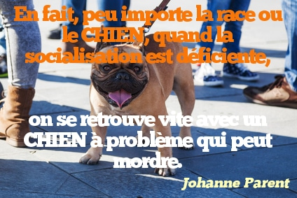 citation chien 21