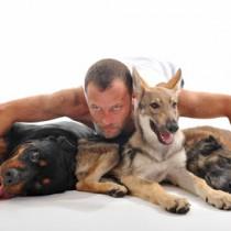 La dominance chez le chien