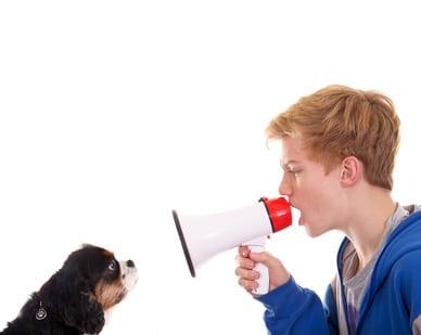 ne jamais crier sur son chien