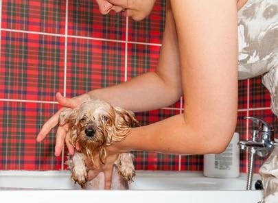 comment laver son chien