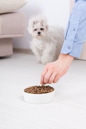 chien agressif aux repas