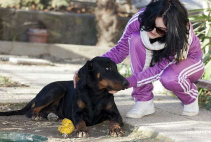 Comment arrêter l'anxiété de séparation chez le chien
