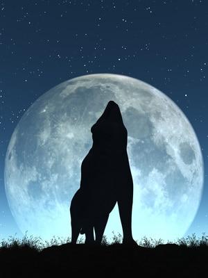10 solutions pour un chien qui pleure la nuit