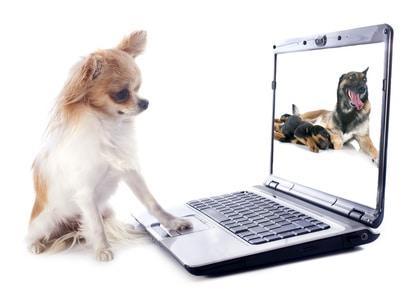 punition et récompense chez le chien