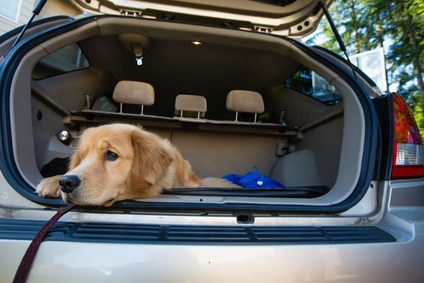 Pourquoi mon chien a peur de la voiture