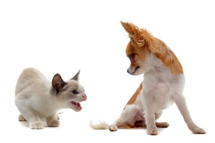 3 astuces pour améliorer la cohabitation chien et chat
