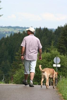 5 conseils pour promener son chien
