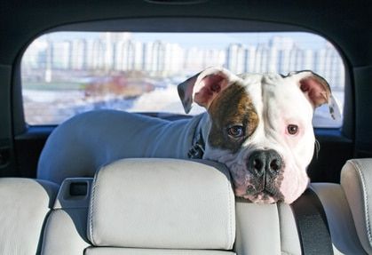 le chien et la voiture : la santé