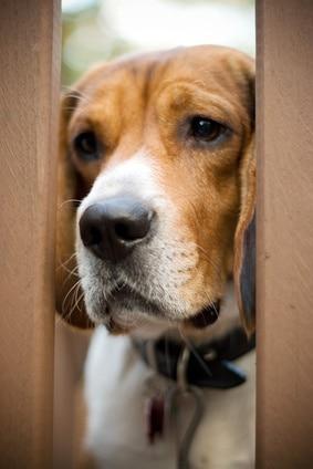 5 méthodes pour corriger les troubles du comportement du chien