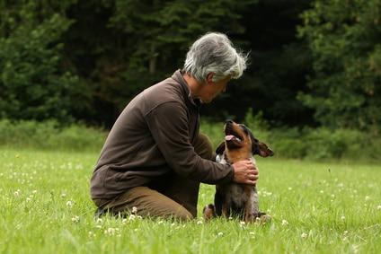comment aborder un chien sans se faire mordre