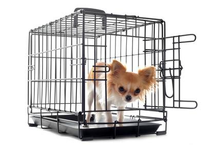 Comment éduquer son chiot à la propreté avec la cage