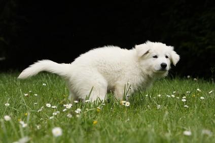 7 erreurs à bannir pour apprendre la propreté à son chien