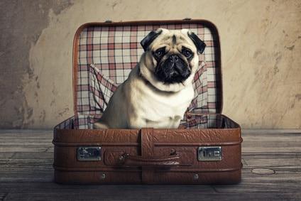 3 conseils pour partir avec son chien en vacances