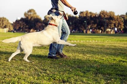 comment jouer avec son chien