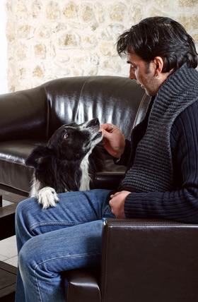comment récompenser son chien