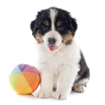 3 erreurs à éviter dans l'apprentissage du chien