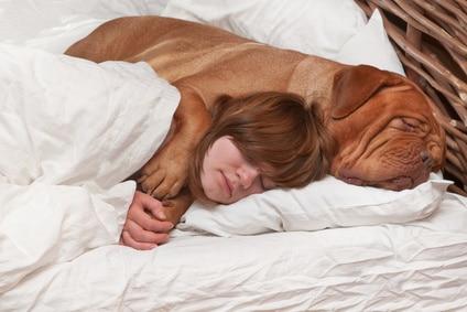 Peut on dormir avec son chien sur le lit