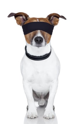 Pourquoi et comment jouer avec son chien à cache cache