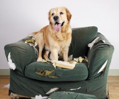 La vengeance chez le chien n'existe pas