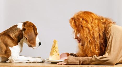 pourquoi mon chien quémande à table ou aux repas