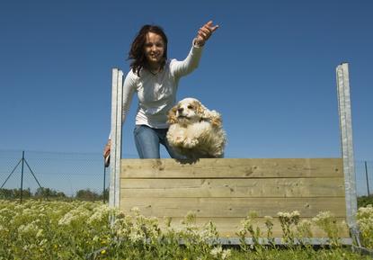 3 façons de stimuler son chien