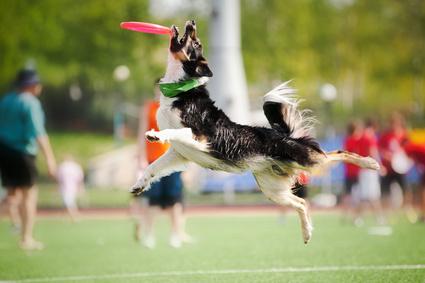 comment avoir un chien joueur avec son jouet