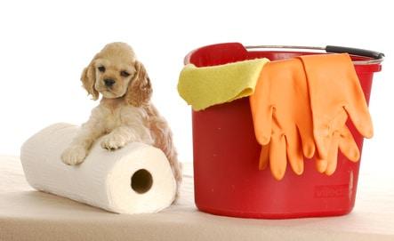 mieux comprendre la propreté du chiot