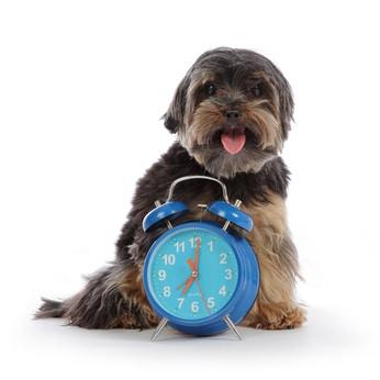 Combien de temps faut-il pour éduquer son chien