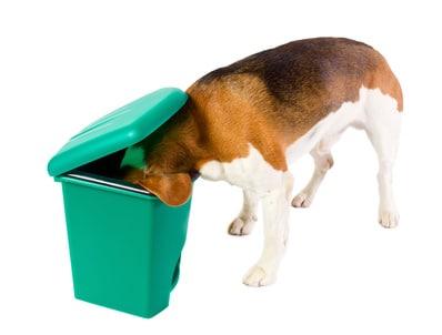 mon chien mange tout