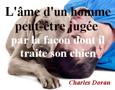 citation chien