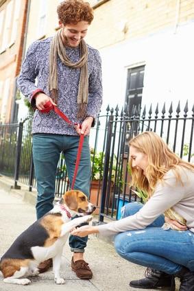 Comment apprendre les bonnes attitudes à son chien
