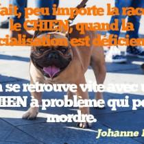 citation chien 21