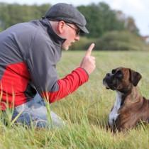 éduquer un chien, c'est facile ou pas ?