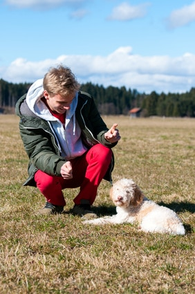 éduquer son chien avec succès
