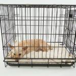 la cage pour chien